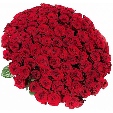 Букет 101 роза красная