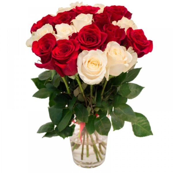 roza belai i krasnai2-min