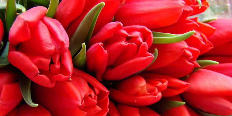 Цветы для Овнов