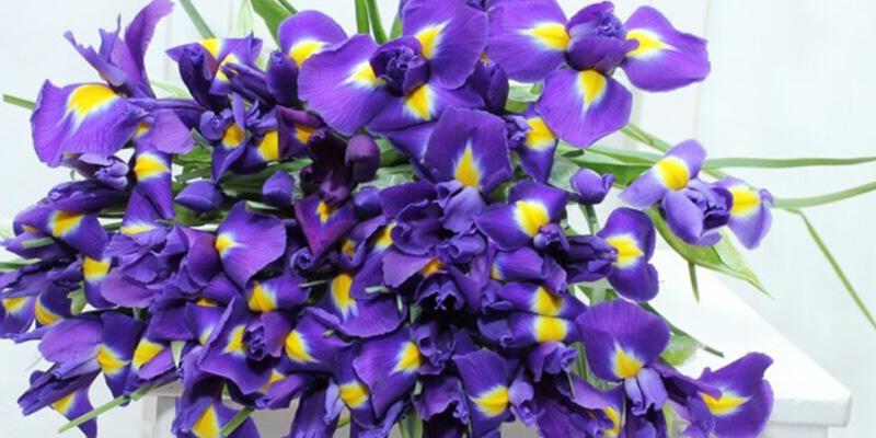 Цветы для Водолеев
