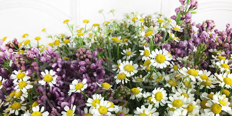 Цветы для Тельцов