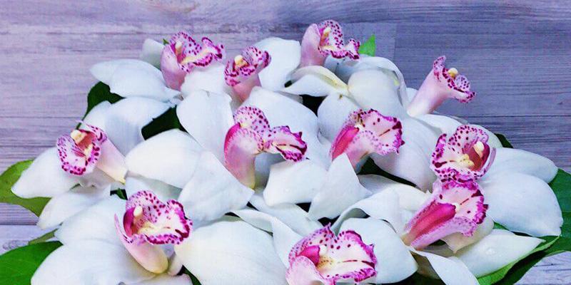Цветы для Раков