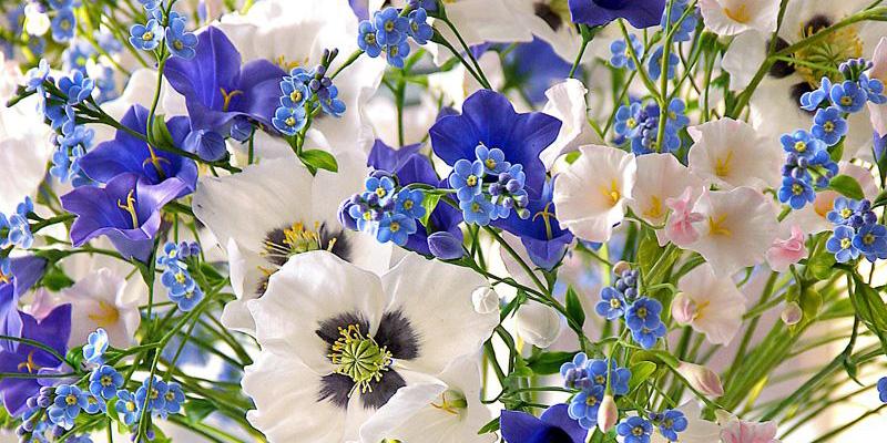 Цветы для Дев