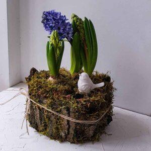 Горшочек весенних цветов , декорированный природными материалами ПЕНЕК с Гиацинтами (L)