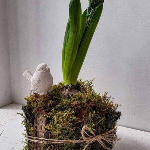 Горшочек весенних цветов , декорированный природными материалами ПЕНЕК с Гиацинтом (малый)