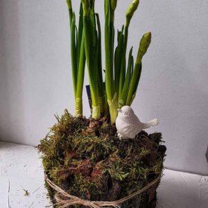 Горшочек весенних цветов , декорированный природными материалами ПЕНЕК с Нарциссами